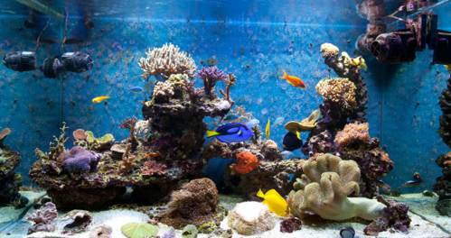 Tips for Maintaining the Perfect Home Aquarium