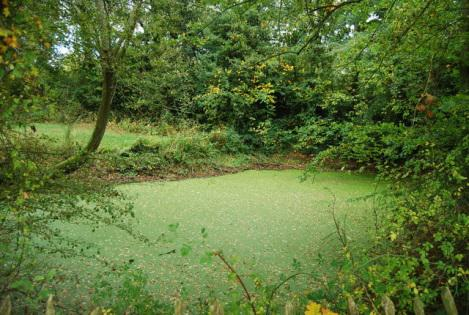 p3 How To Control Algae In Your Pond