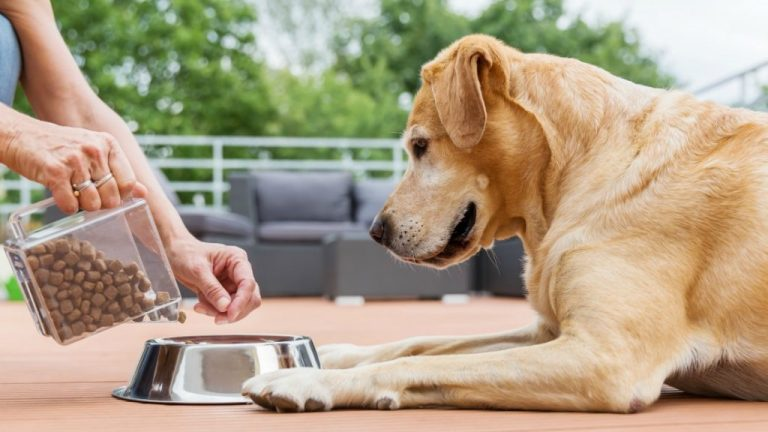 Choosing the Best Grain Free Dog Food for Your Pet